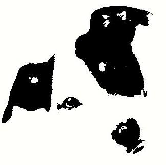 Logo Veterinair Consultant bijgesneden