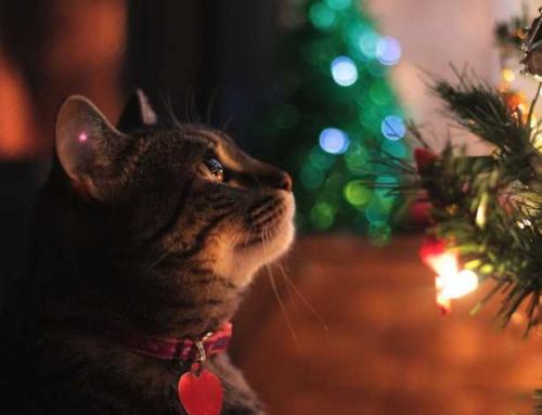 Zo voorkom je dat de kat in de kerstboom klimt