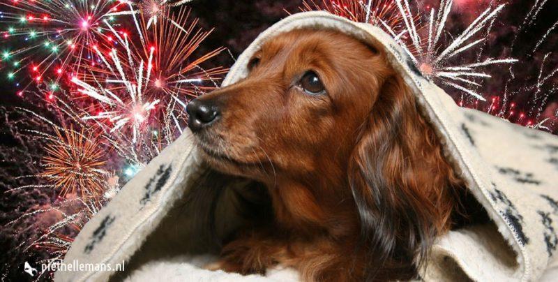 Tips voor vuurwerk angst bij dieren