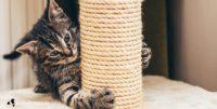 Nagelonderhoud bij hond en kat