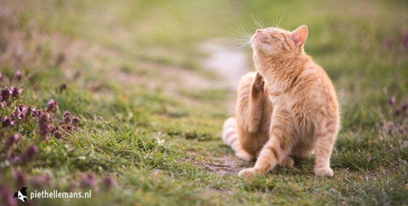 parasieten bestrijding bij hond en kat