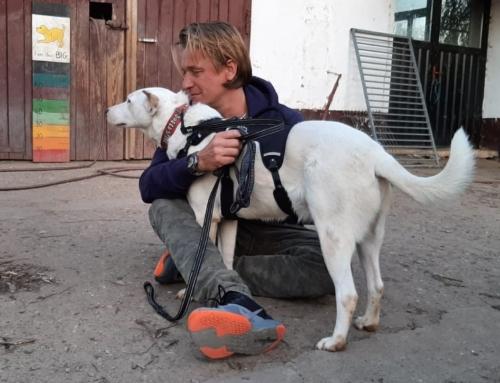 Checklist hond of kat aanschaffen tijdens corona crisis